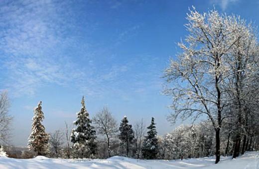 Crni čot, Nacionalni park Fruška gora