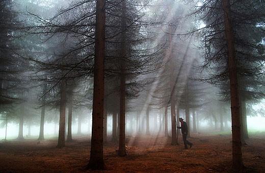 Šuma u blizini Sokobanje
