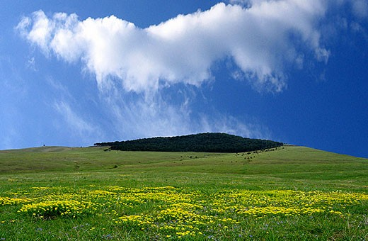 Landscape Zlatibor