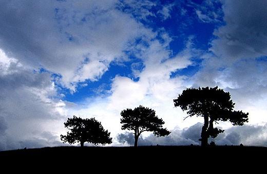 Zlatibor pejzaž