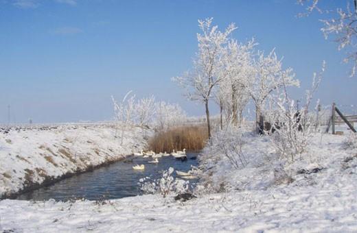 Zimska idila, Brkin salaš - Čenej, Novi Sad