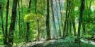 Dumbovo, National Park Fruška gora