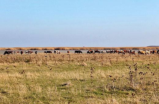 Rezervat prirode Slano Kopovo