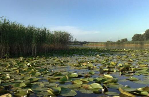 Nature reserves Obedska Bara