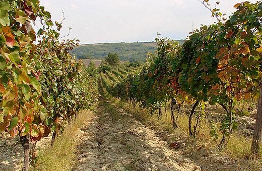 Vinogradi - Velika Hoča